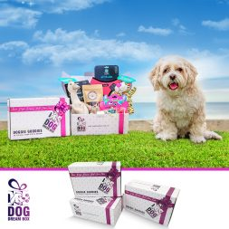 Dog Toys, Treats and Accessories